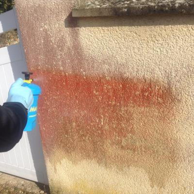 Traitement anti-algues rouges avant
